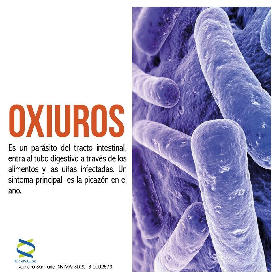los parasitos oxiuros son peligrosos