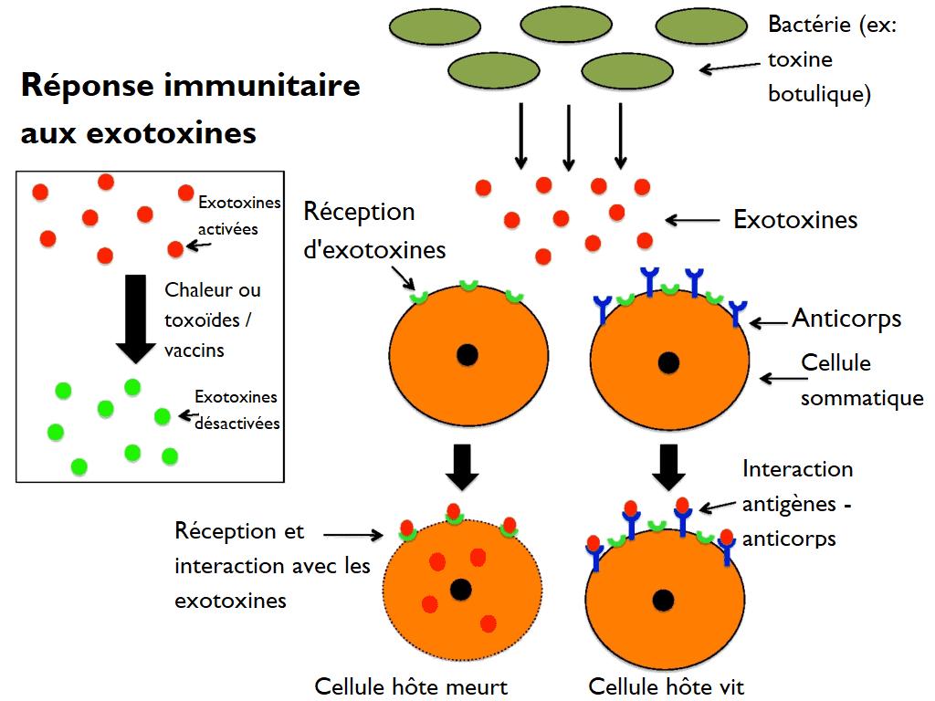 Substanțe toxice
