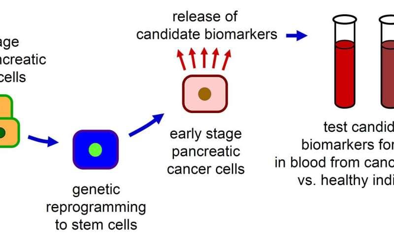 Pancreatită redusă potență