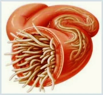 paraziti intestinali mancarime piele