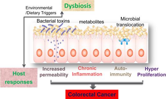 Gutflora PPT | Gut Flora | Human Gastrointestinal Tract