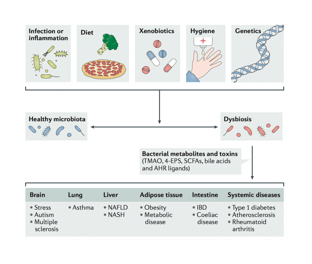 Dysbiosis and oral health: how to design individualized preventive care pathways
