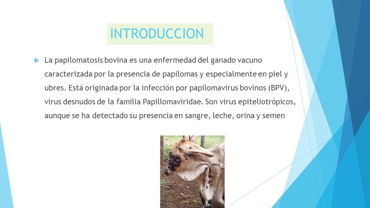 papilomatosis bovina ppt)