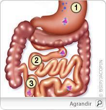 anemie b12