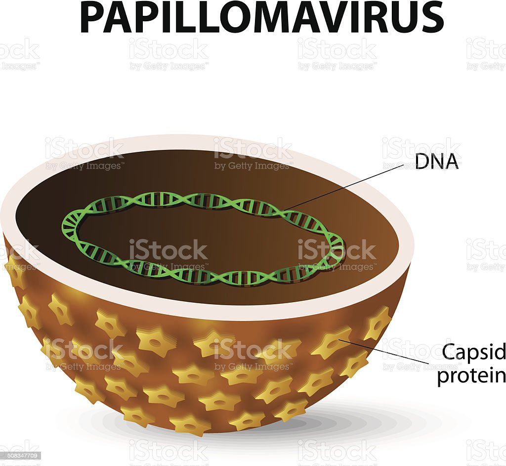 el virus hpv papiloma)