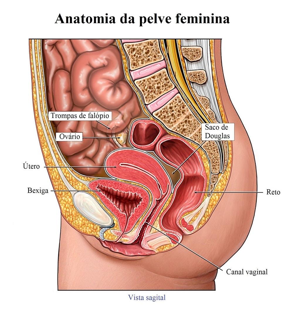 cancer epitelial de ovario)