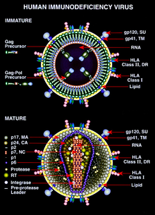 top 10 virusi mortali