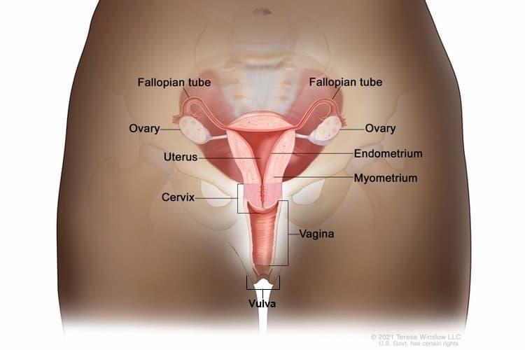 cervical cancer gov