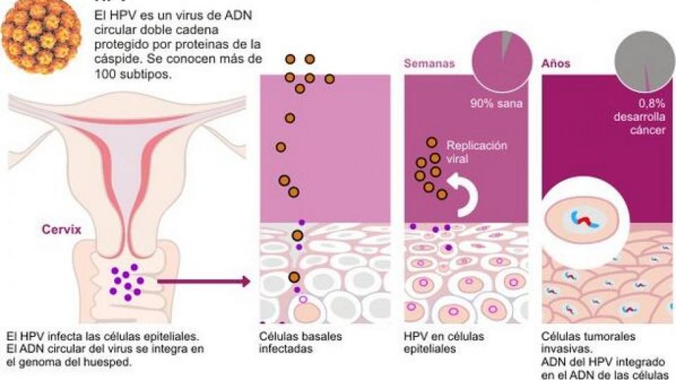 herpes genital virus del papiloma humano)