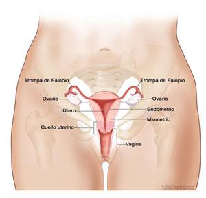 cancer de col uterin ascus