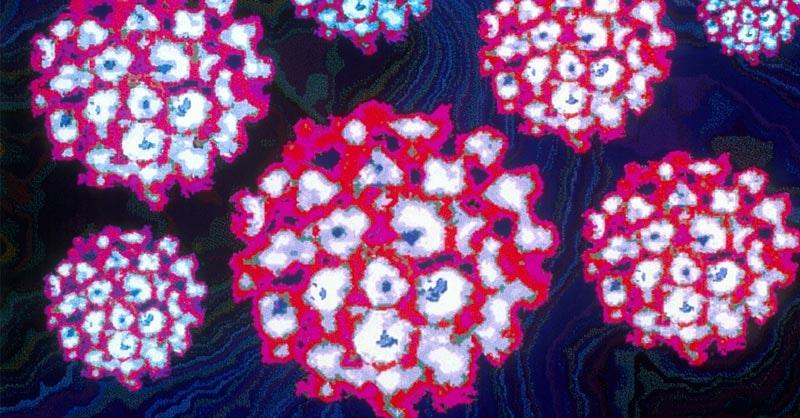 risultato positivo papilloma virus)