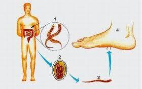 Par bio de parasitos.pdf
