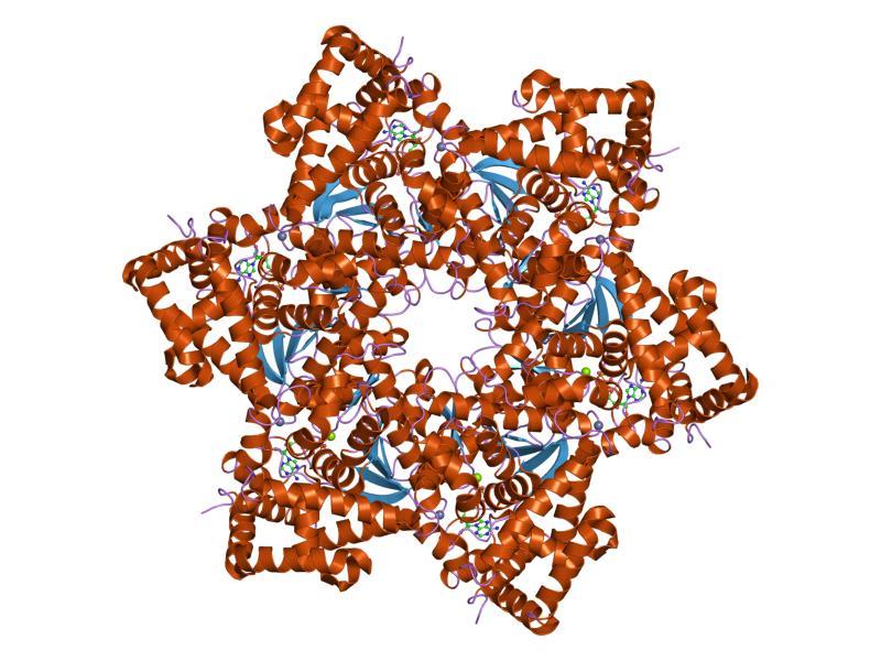 virus papiloma humano numero 33