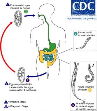 incidence of enterobiasis)