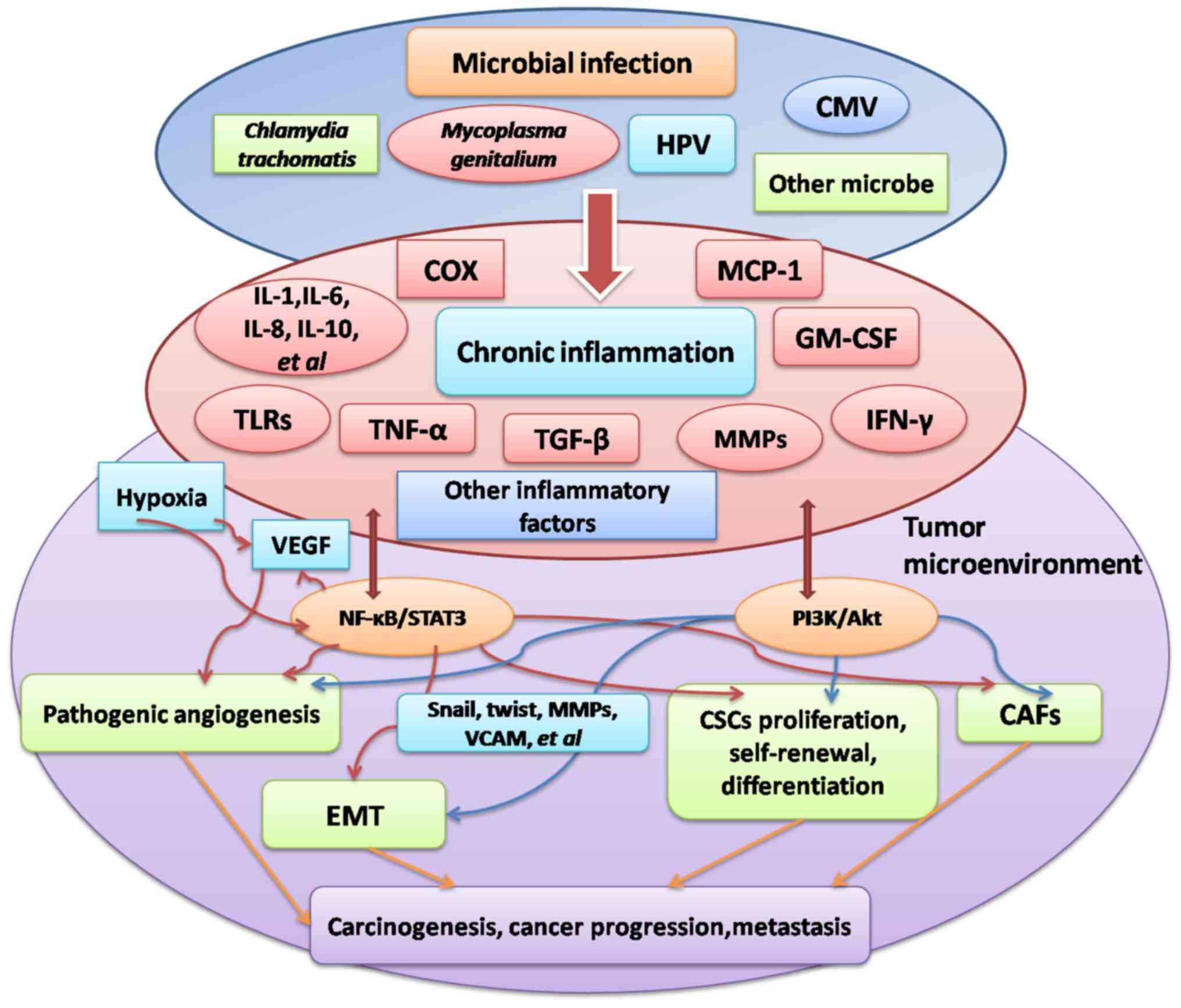 human papillomavirus infection symptoms male parazite v lidskem tele