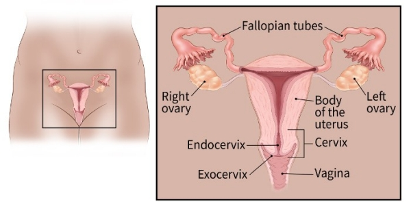 cervical cancer can you get pregnant