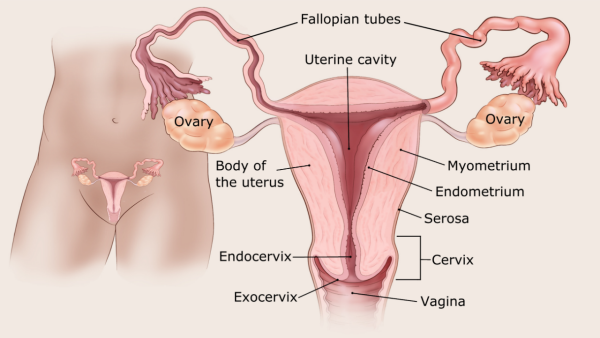 endometrial cancer definition)