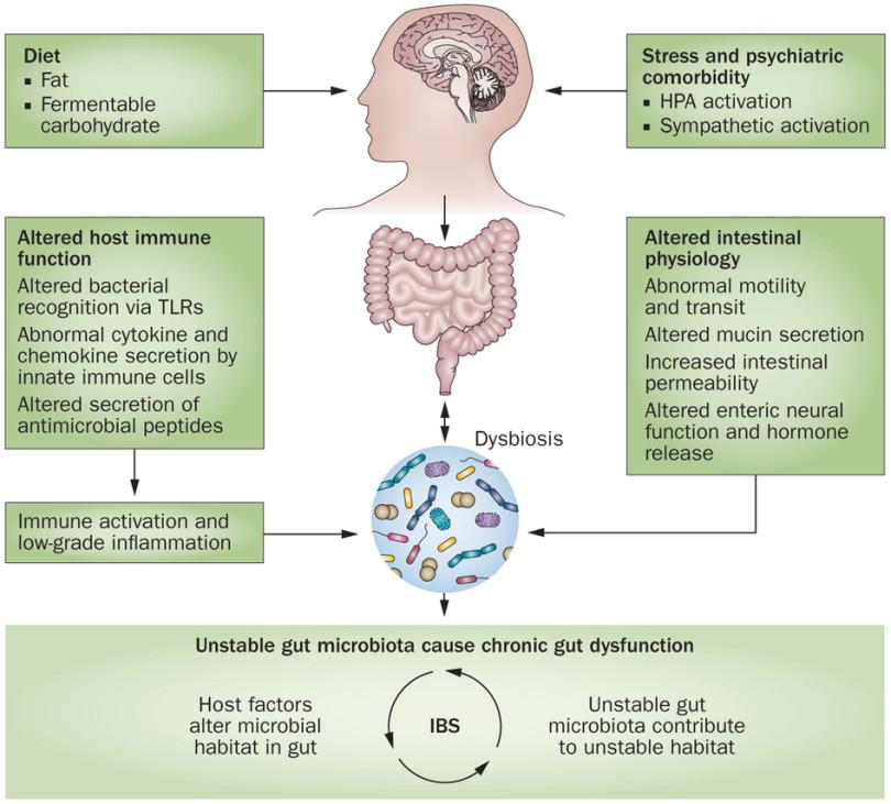 dysbiosis skin problems)