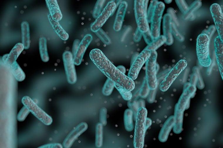 yoghurt bacteria