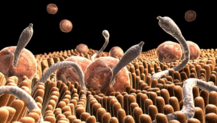 simptome paraziti papillomavirus maladie a vie