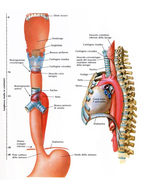 hpv tumore esofago)