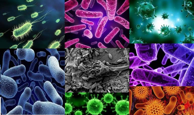 bacterii regnul monera