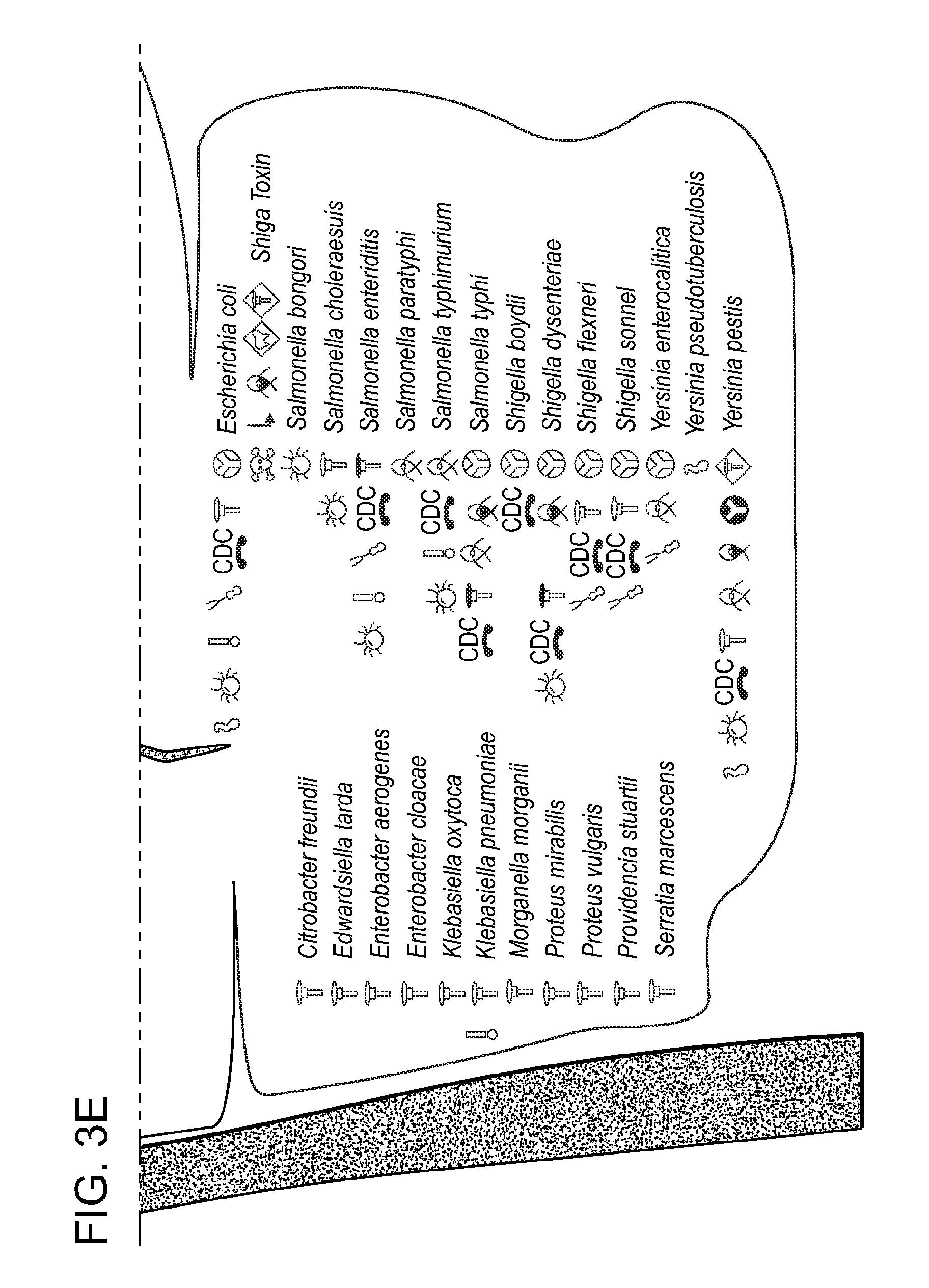 enterobiasis y shigelosis)
