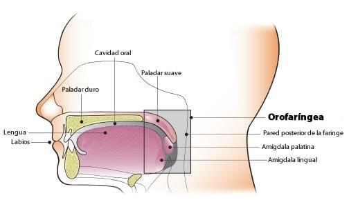 papiloma humano cancer garganta