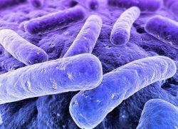 bacterii anaerobe