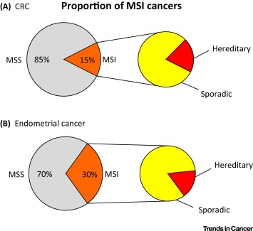 endometrial cancer microsatellite instability)