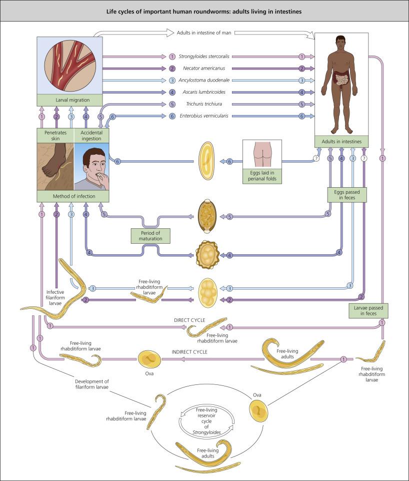 papiloma humano y cancer cervicouterino es lo mismo