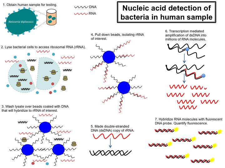human papillomavirus deoxyribonucleic acid detection assay
