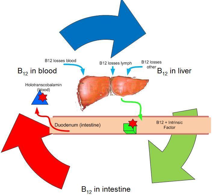 anemie b12)