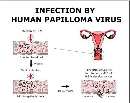 human papilloma virus spread through)