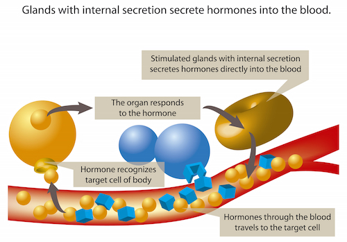 cancer affecting hormones