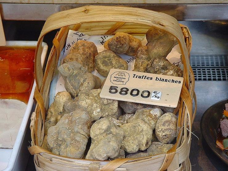 ciuperci scumpe
