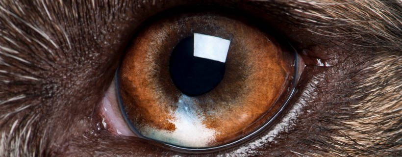 papilloma virus occhi