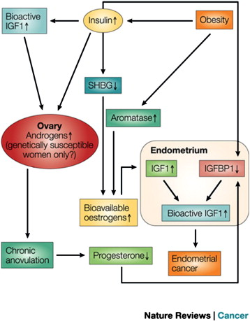 endometrial cancer and obesity)