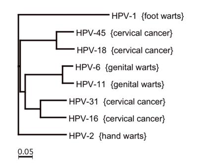 papillomavirus hpv 18