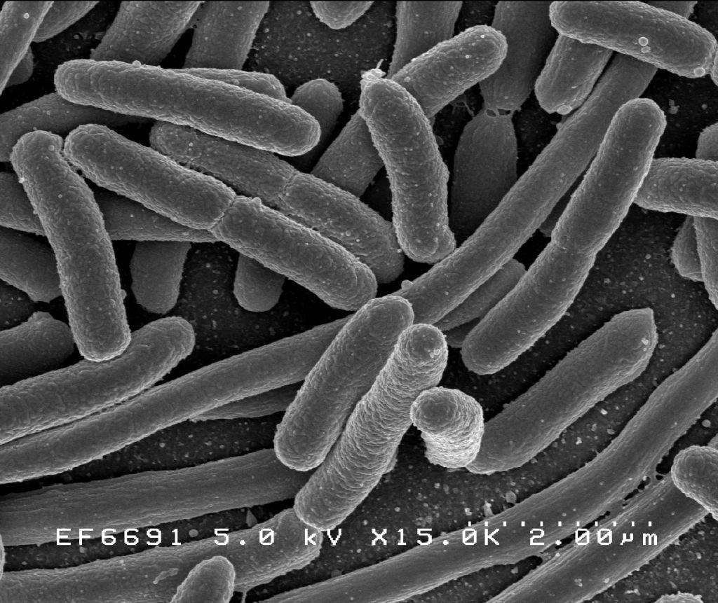 combaterea biologica a bacteriilor