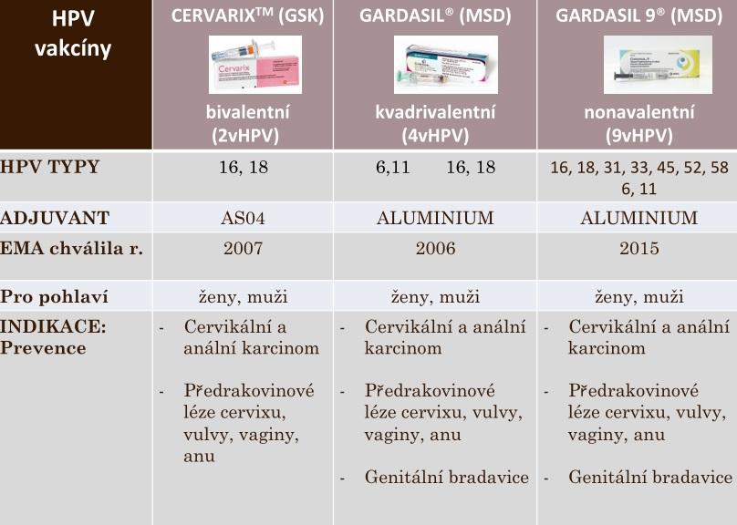 papillomavirus u muzu