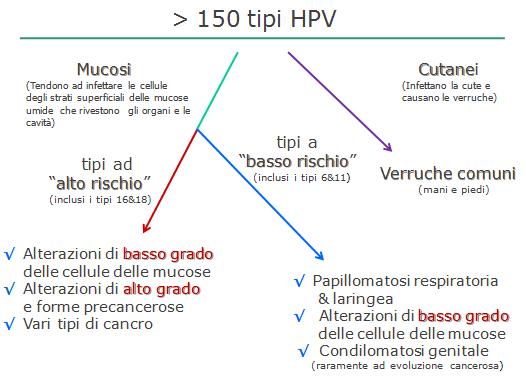papilloma virus a basso rischio)