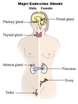 cancer endocrine system