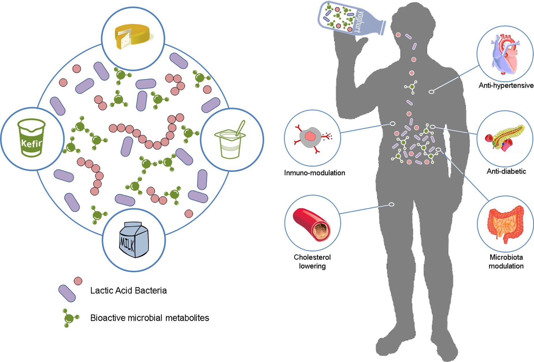 gliste i paraziti kod pasa papillomavirus traduction anglais