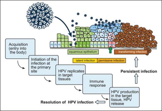 papillomavirus infection tissue)