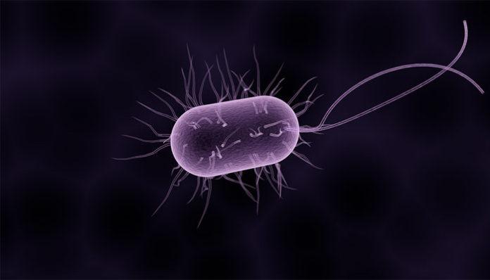 papiloma uzrokuju paraziti u vasem telu)