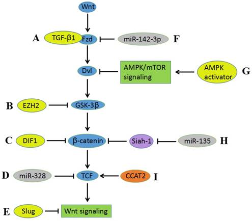 hpv cancer pathway