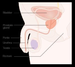 simptome cancer in organism)
