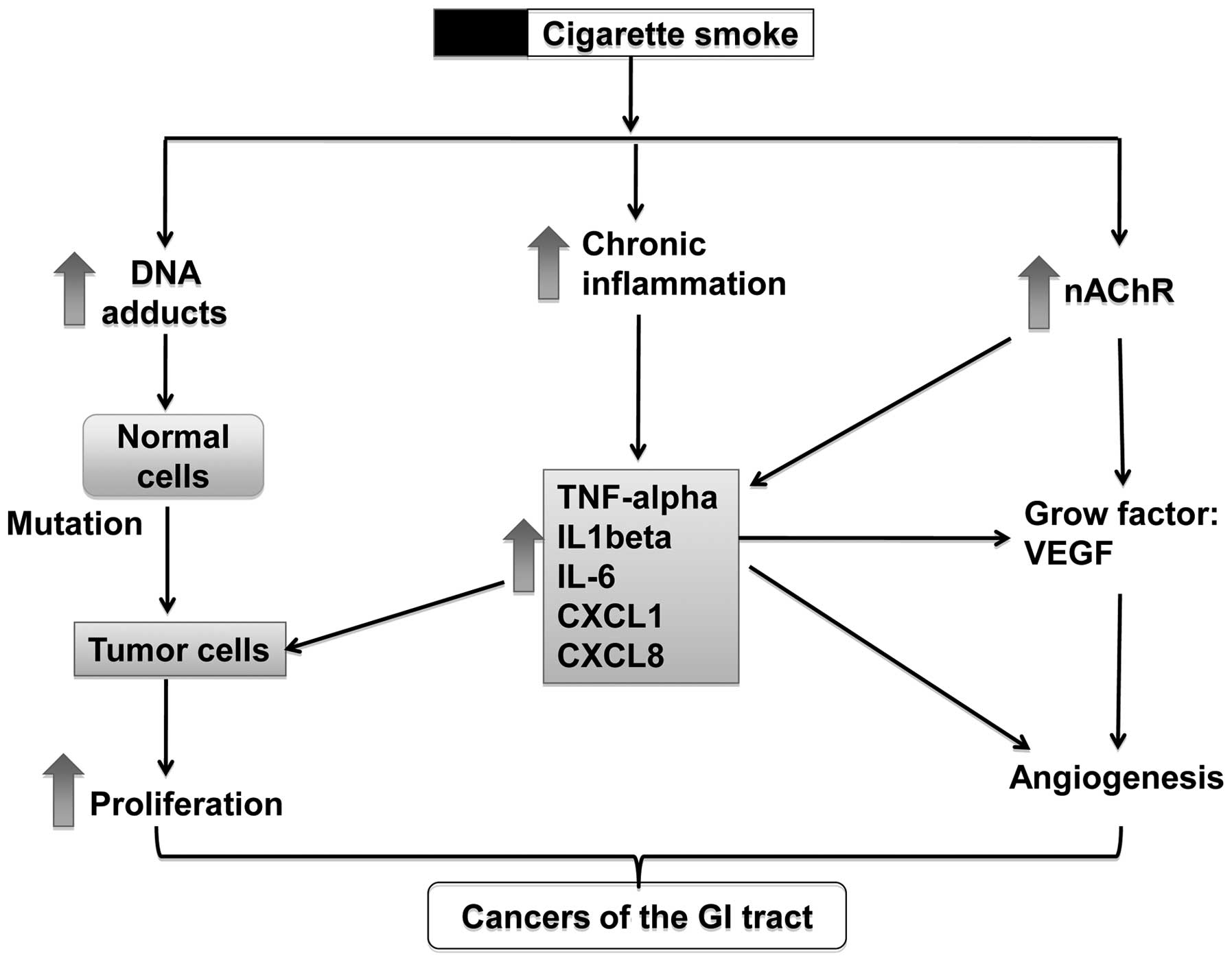 cancer gastric smoking)