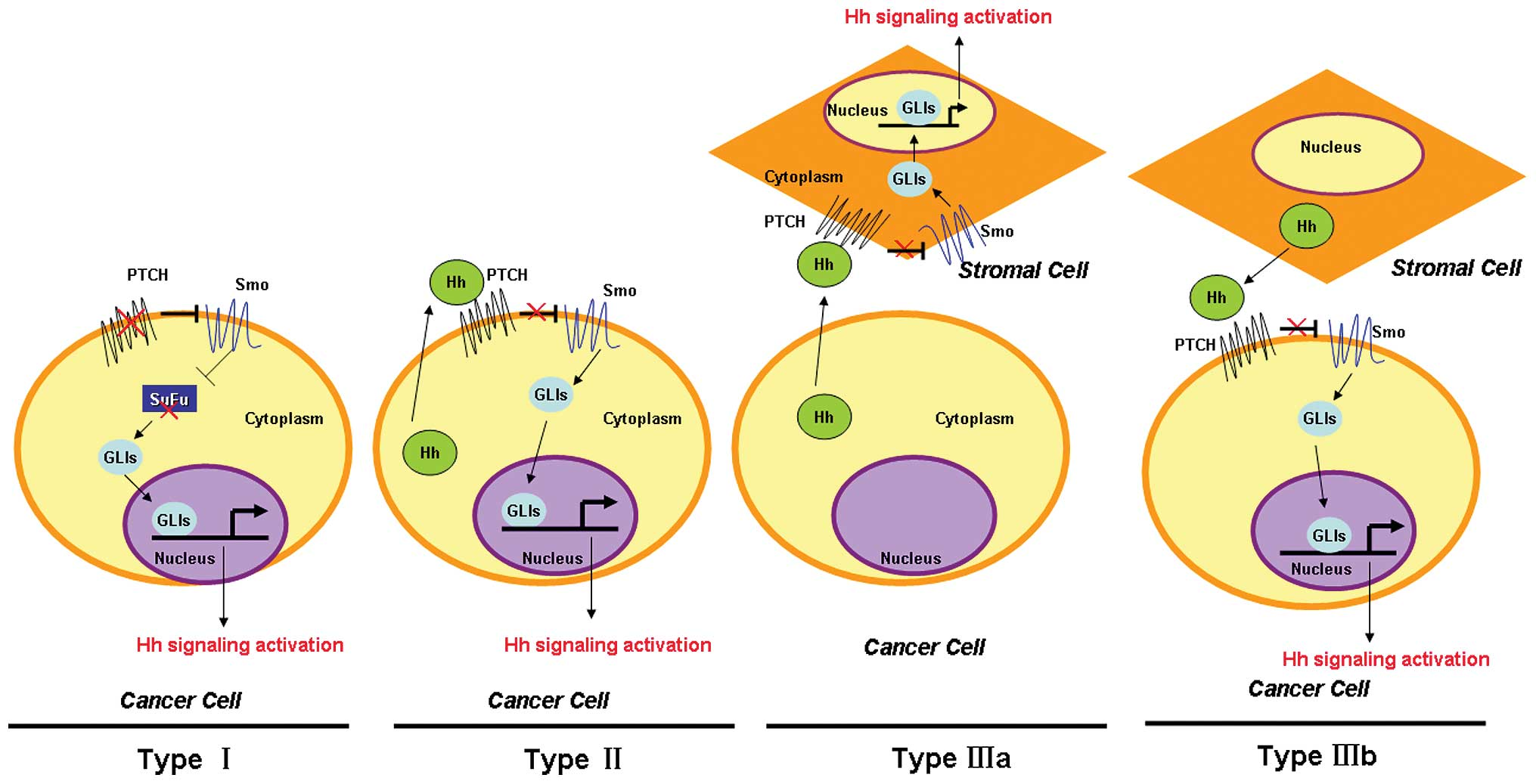 hepatocellular cancer signalling pathway)